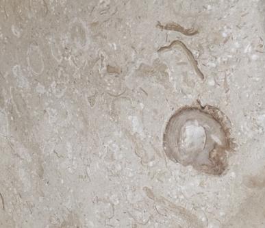 Coralina Shell Limestone Supplier